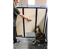 dog day care door with handle