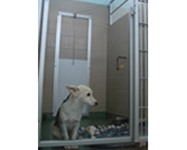 non-insulated dog door