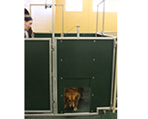 dog day care cable lifted door