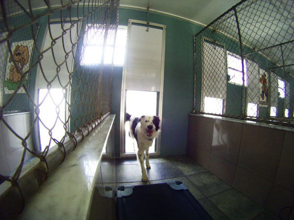 Interior view of a Pompano Pet Lodge kennel door